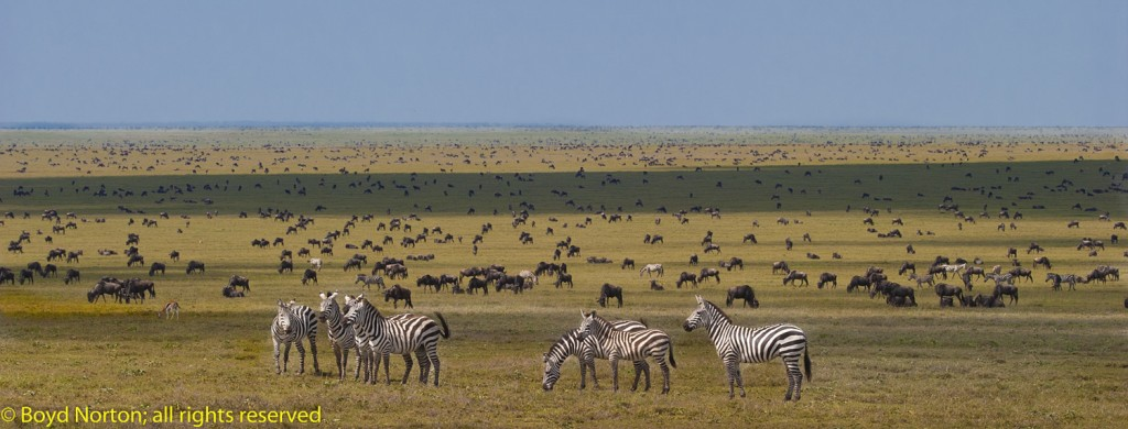 The Great Serengeti Migration