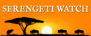serengeti-header-310